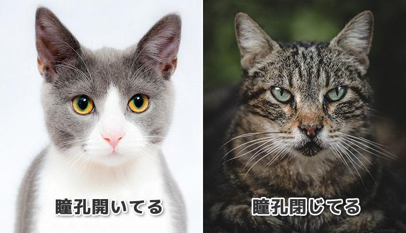 猫の瞳孔比較